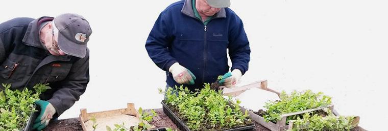 Baumschule / Pflanzenproduktion 3