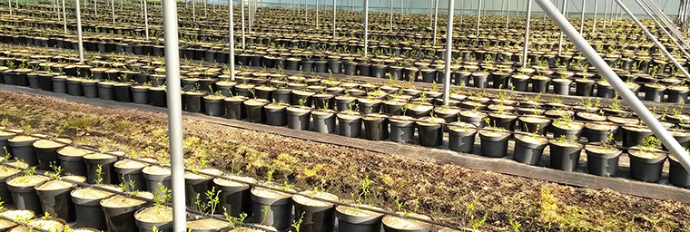 Baumschule / Pflanzenproduktion 5
