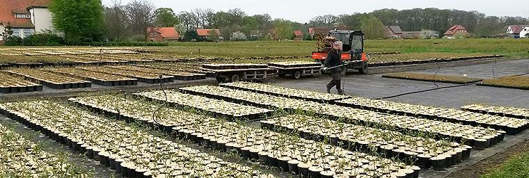 Baumschule / Pflanzenproduktion 6
