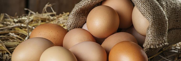 Eier / Hühnereier