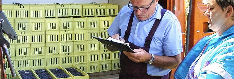 Heidelbeer Produktion - 5 Qualitätskontrolle