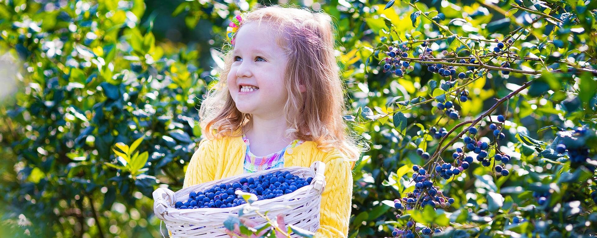 Heidelbeeren / Blaubeeren von Husmann´s Obstgärten