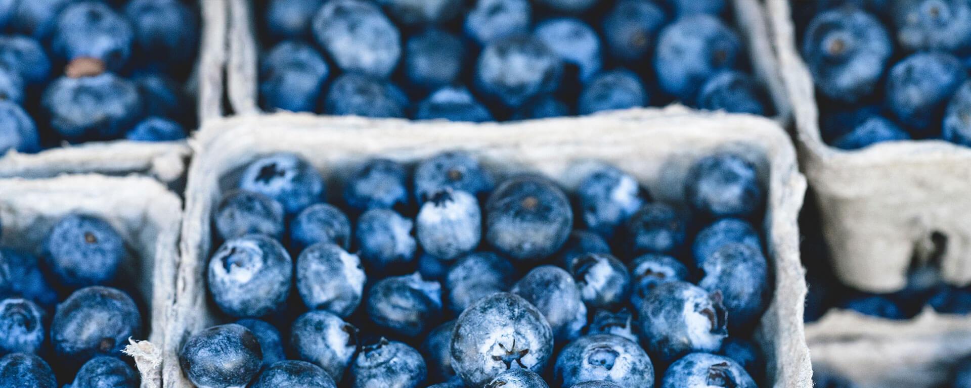 Husmann´s Obstgärten Heidelbeeranbau & Heidelbeer Pflanzenproduktion - hohe deutsche Qualität