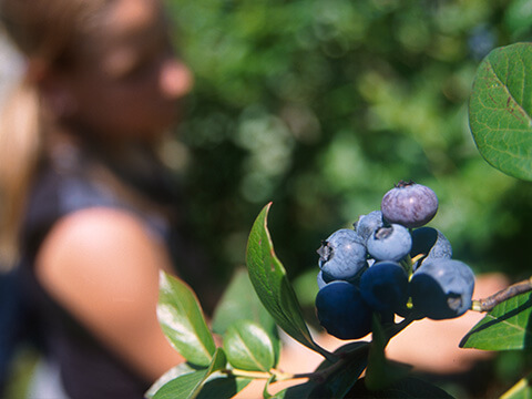 Husmann´s Obstgärten Borstel 4