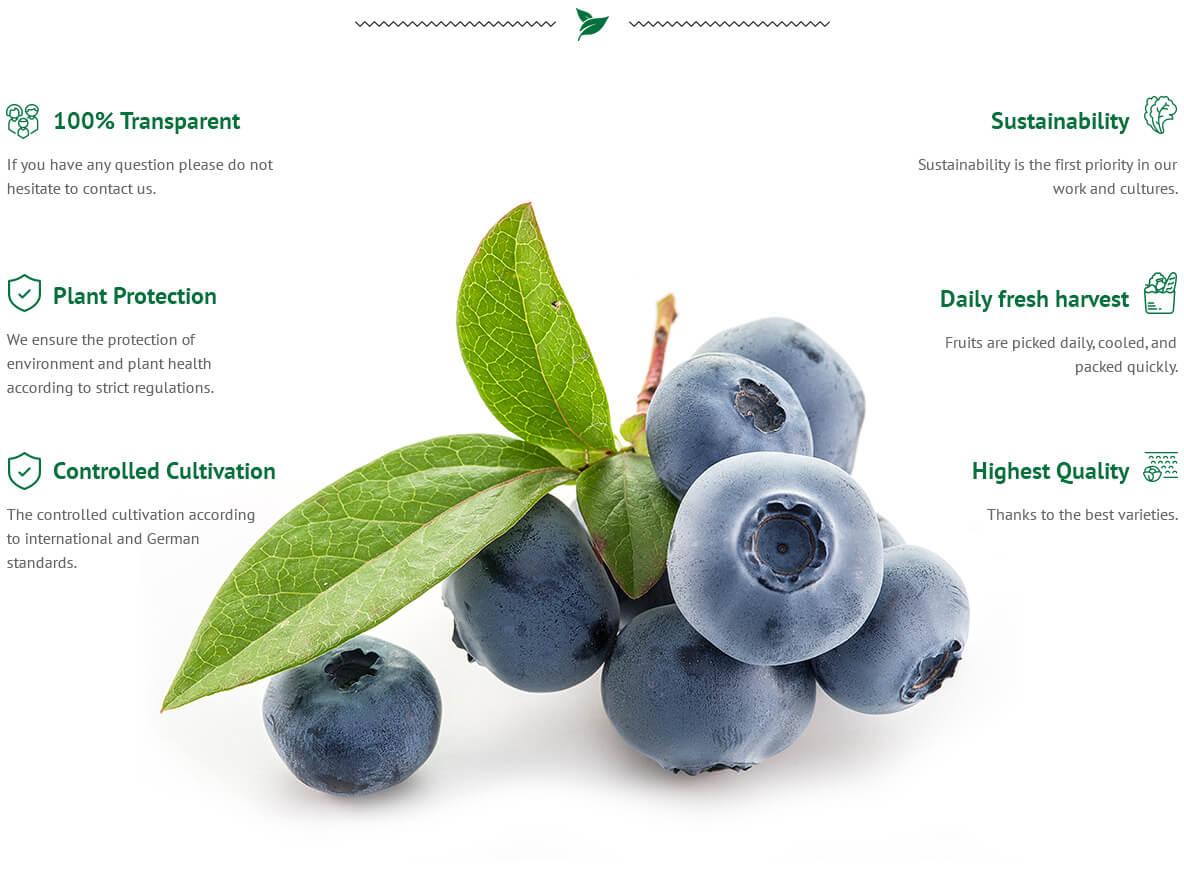 Heidelbeere / Blaubeere / Blueberry